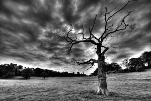 1 deadtree