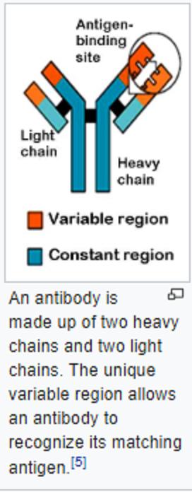 antigen binding sites