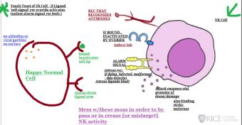 +++ JC NK cell diagram gen fn
